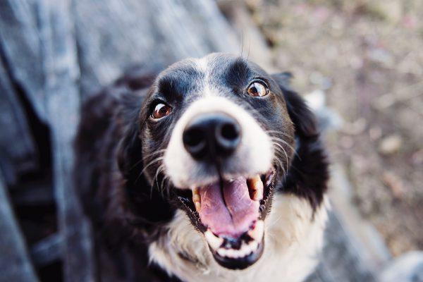 Een hondenverzekering afsluiten
