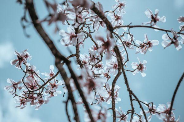 Wat zijn mooie tuinplanten voor in de winter?